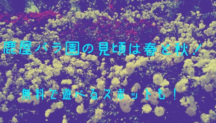 鹿屋バラ園の見頃は春と秋! 入場料やご当地薔薇ソフトの口コミ!