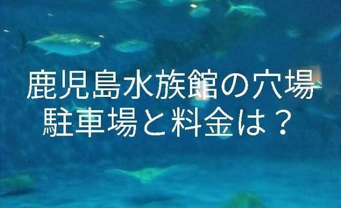 鹿児島水族館の穴場駐車場と料金は?イルカのショーの時間も