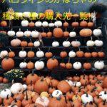 ハロウィンのかぼちゃの種類と名前は?種からの育て方も!