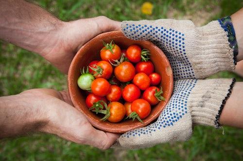 甘いトマトの見分け方と美味しい保存法!リコピンは夜より朝摂る理由